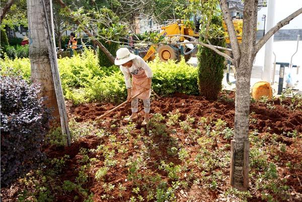 补种植物 美化环境