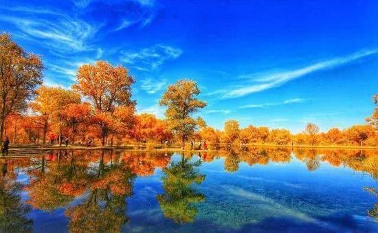 走近新疆美丽的胡杨林
